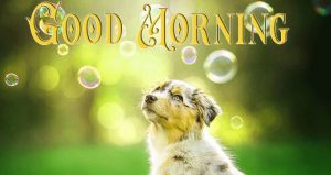 cute puppy good morning pictures 20