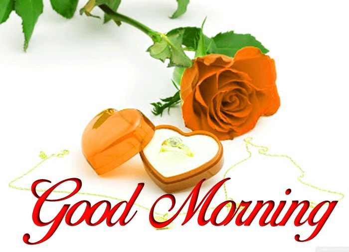 Good Morning photo with red rose and flower hd download