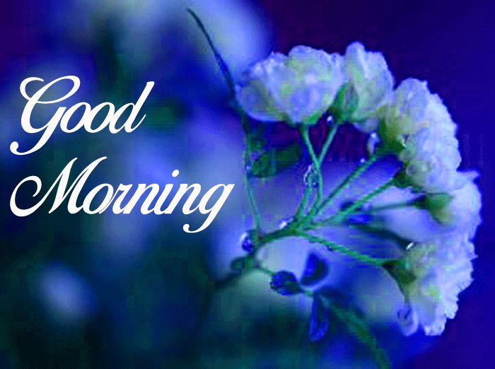 Good Morning pics with white rose hd download