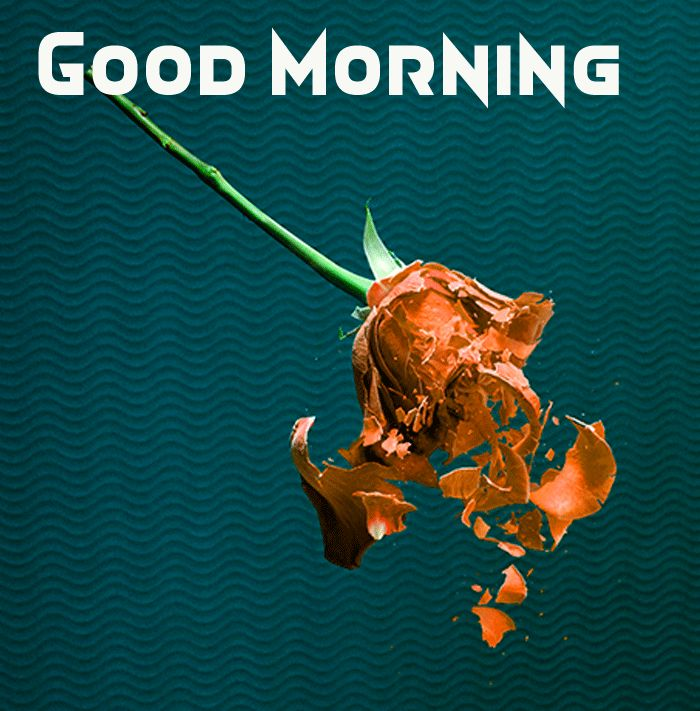 good morning roses pictures hd