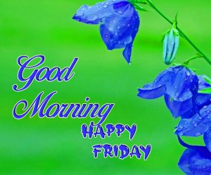 latest blue flower Good Morning Happy Friday images hd