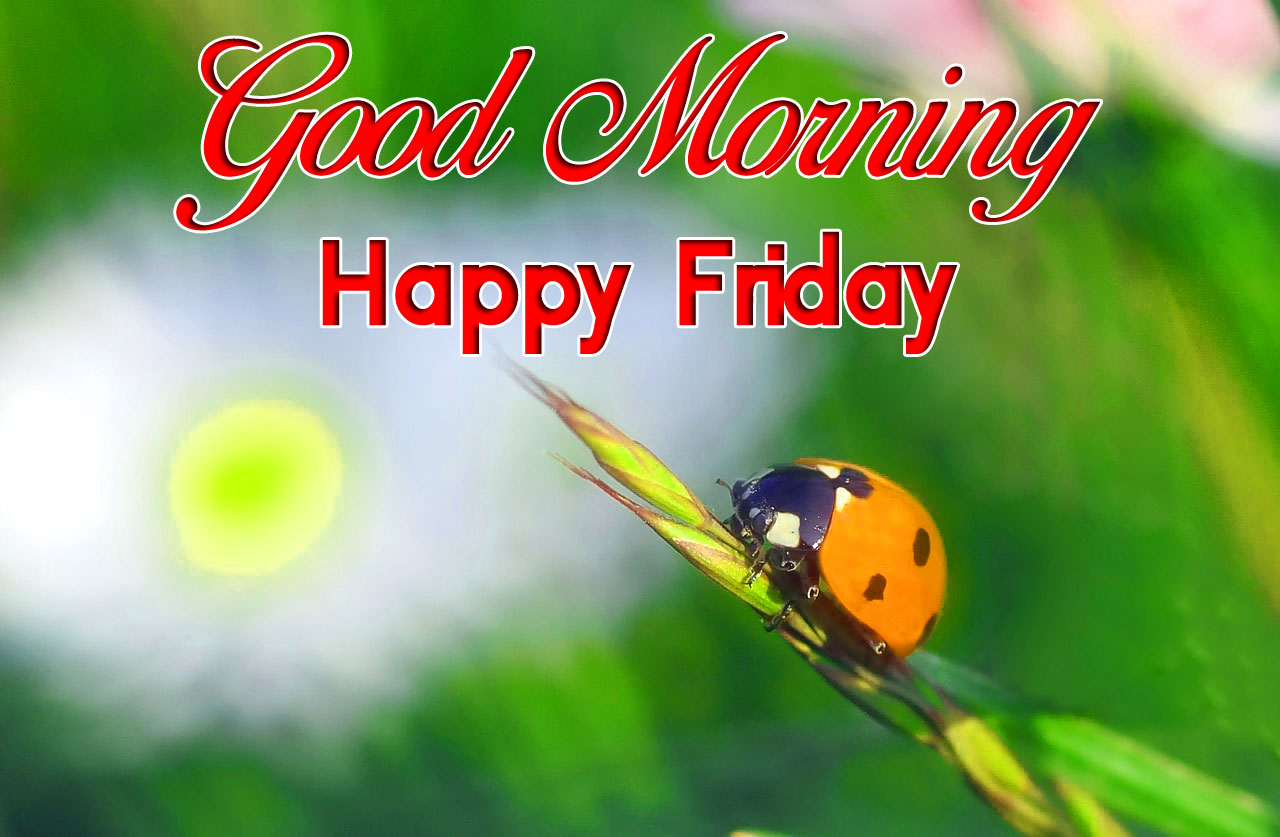 latest cute Good Mornin Happy Friday images