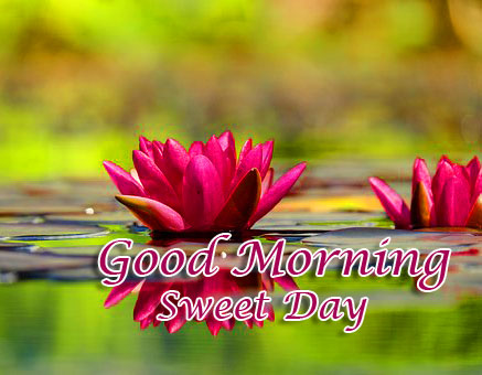 Beautiful Flower on Water with Good Morning Wish