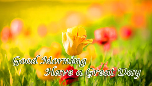 Garden of Flowers with Good Morning Wishing