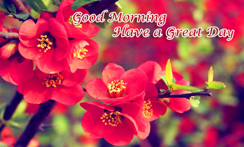 HD Flower Garden Image with Good Morning Wish
