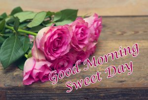 Pink Rose Good Morning with Message Image