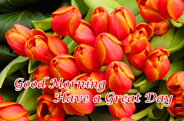 Tulips with Good Morning Messge