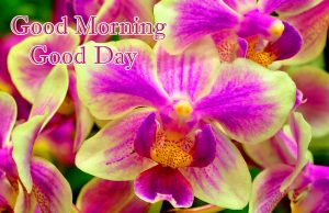 White and Purple Orchids with Good Morning Wish