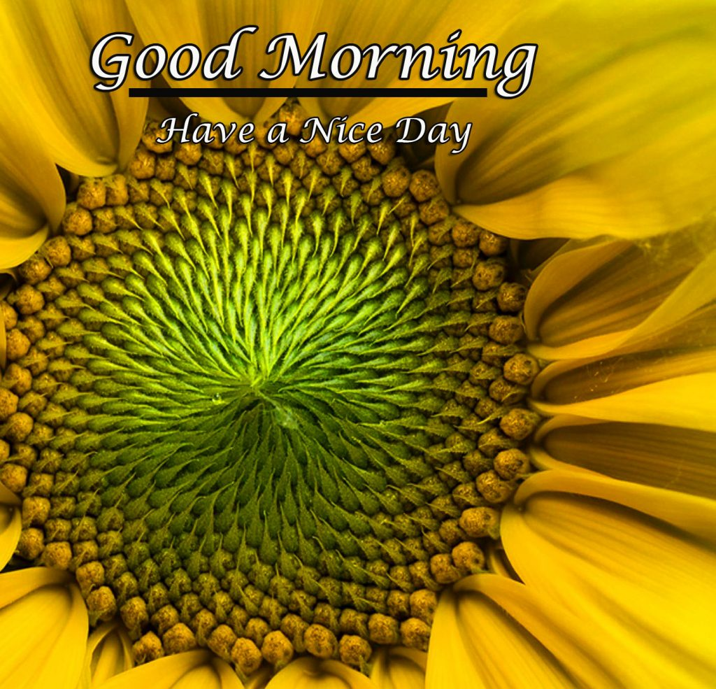 Good Morning Flowers with Messages Images and Wallpapers (New Collection)