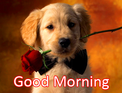 Dog with Rose and Good Morning Wish