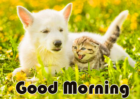 Good Morning Dog and Cat Pic