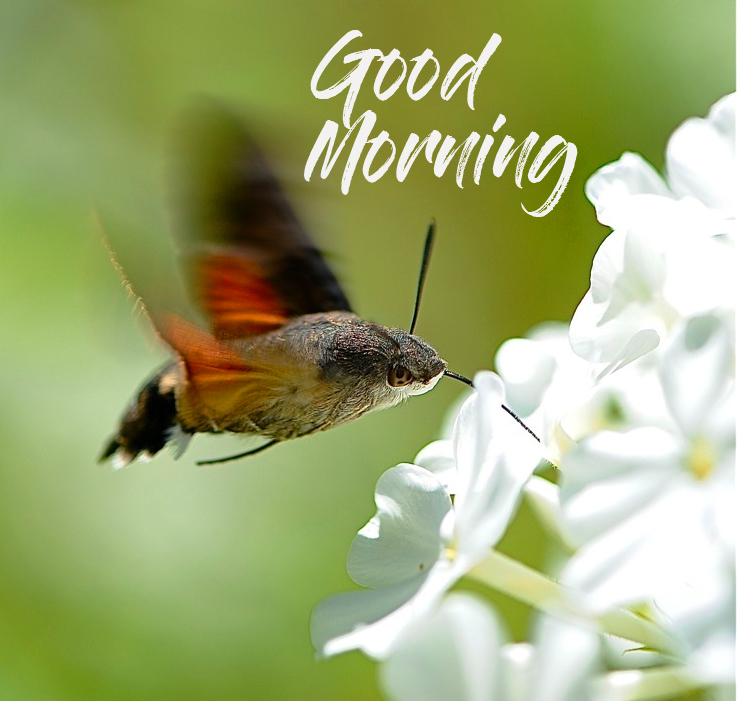 Good Morning with Bird Nature Pic