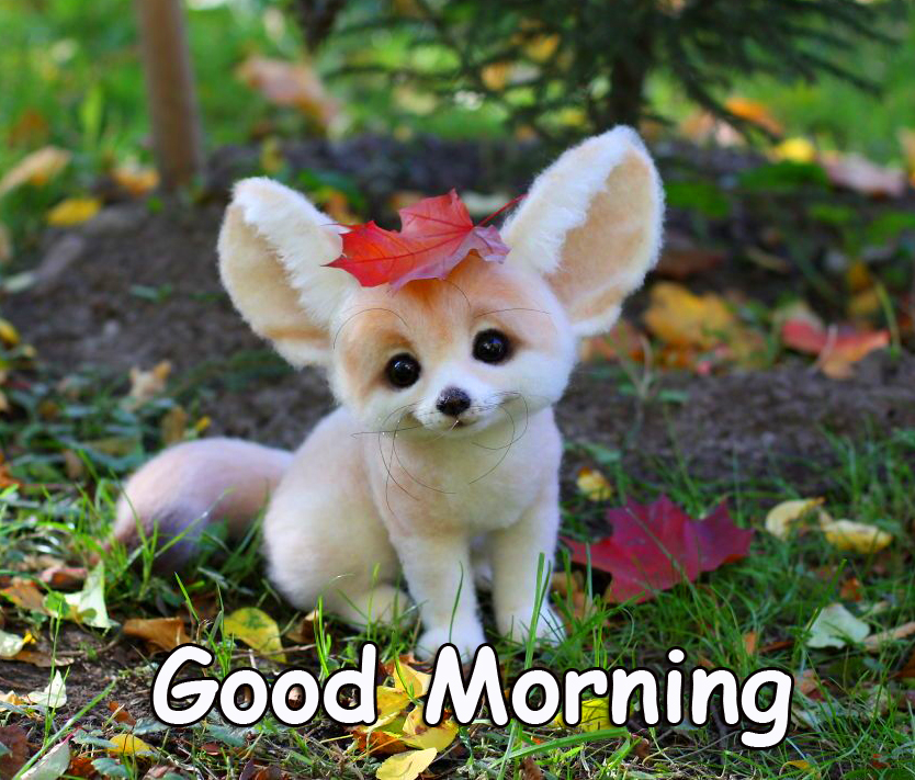 Good Morning with Cute Animal
