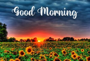 Good Morning with Nature Beauty Pictures