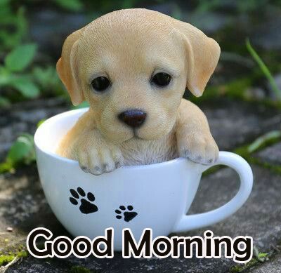 Good Morning with Puppy in Cup