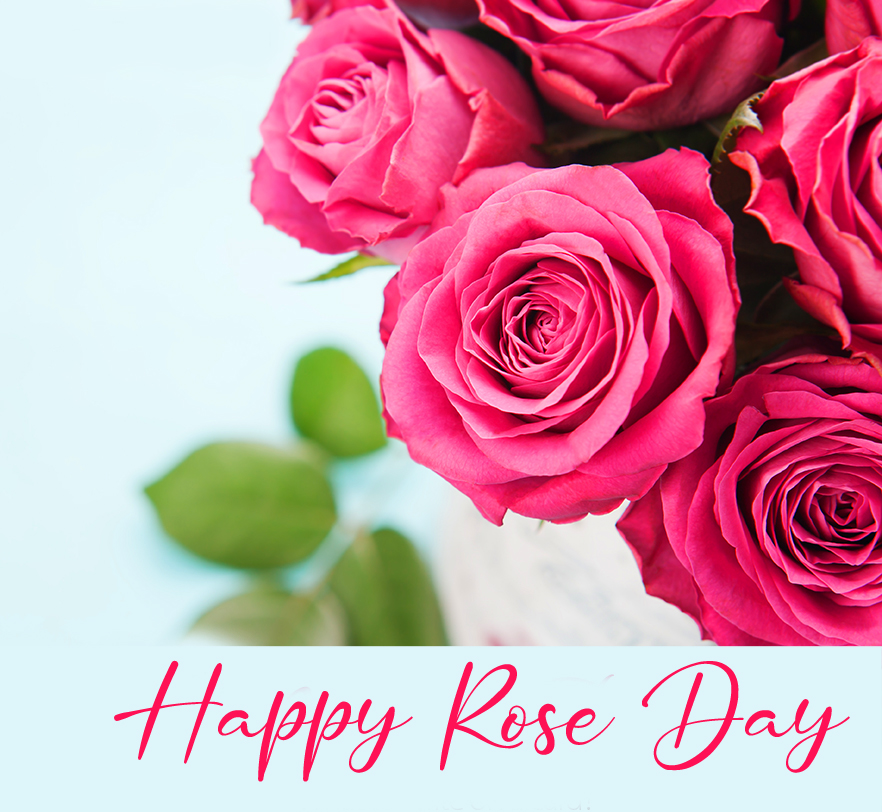 Happy Rose Day with Pink Rose