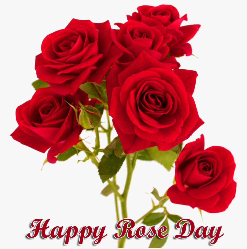 Happy Rose Day with Red Roses