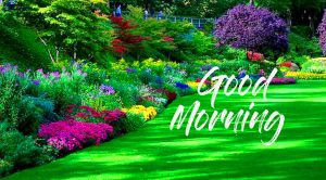 Lovely Nature HD Good Morning Pic