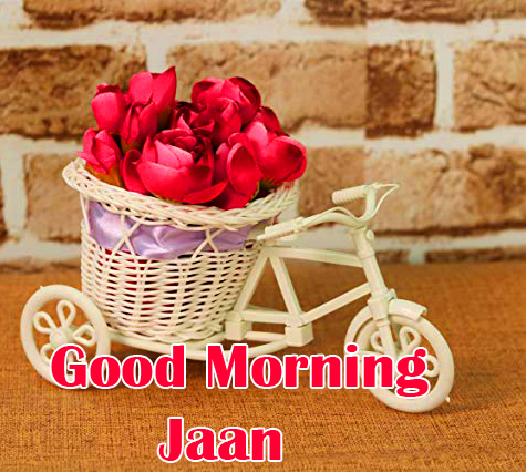 Rose Cycle with Good Morning Jaan Wish