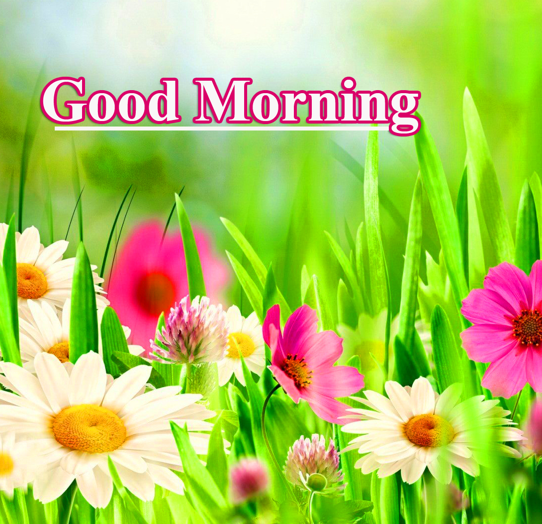 Spring Flowers with Good Morning Wish