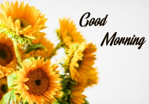 Sunflowers Good Morning Image HD