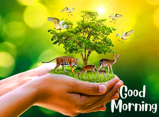 Wildlife and Nature Good Morning Image