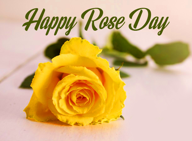 Yellow Rose with Happy Rose Day Message