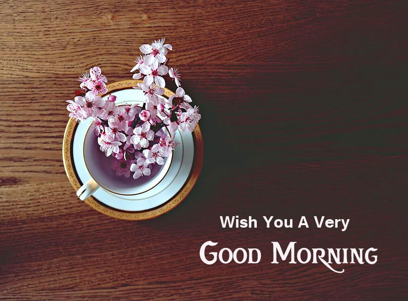 Beautiful Blooming Flowers with Wish You a Very Good Morning Message