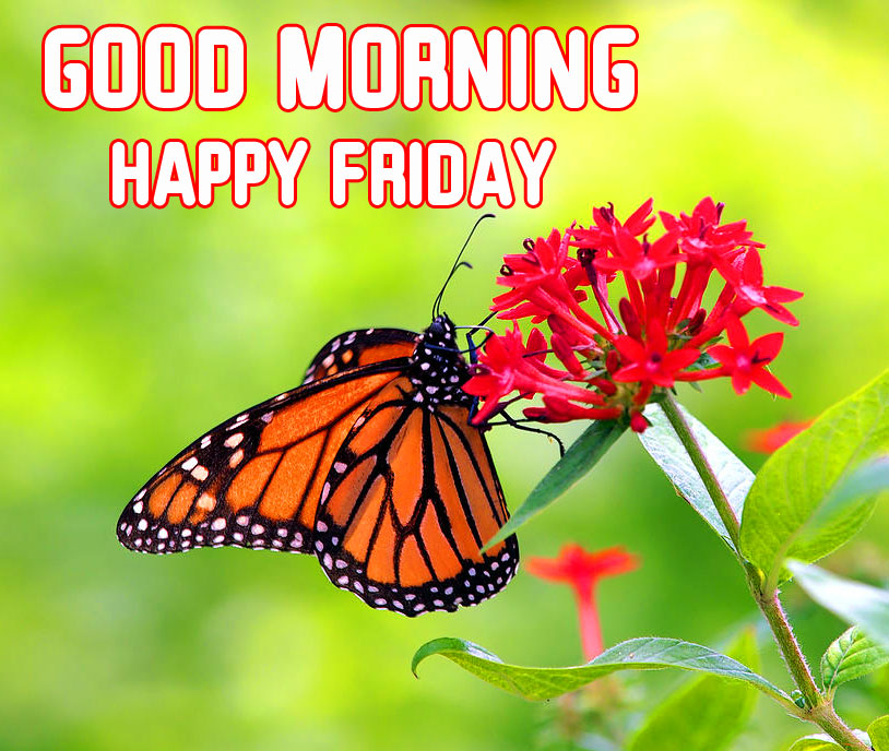 Butterfly on Flowers with Good Morning Happy Friday Wish