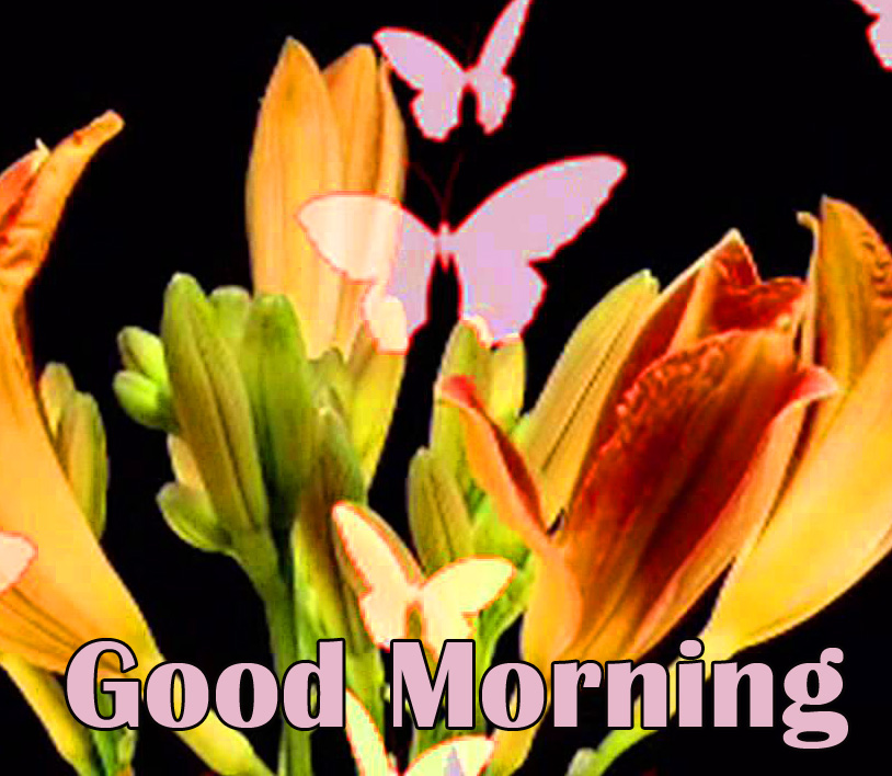 Flowers and Butterflies Good Morning Image