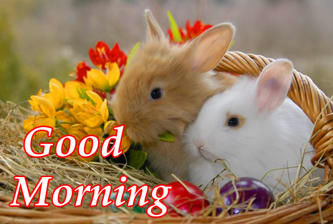 Good Morning Bunnies Picture HD