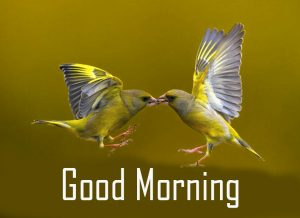 Good Morning Cute Love Birds Picture