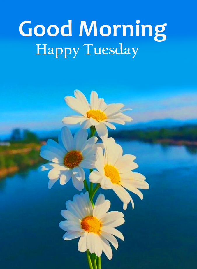 Good Morning Happy Tuesday with Flowers