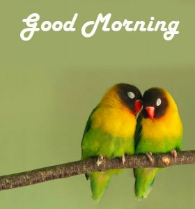 Good Morning Love Birds HD Picture