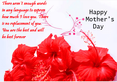 Hibiscus with Happy Mothers Day Wish
