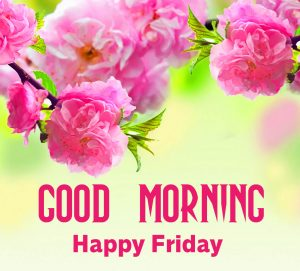 Latest Flowers HD Good Morning Happy Friday Wallpaper