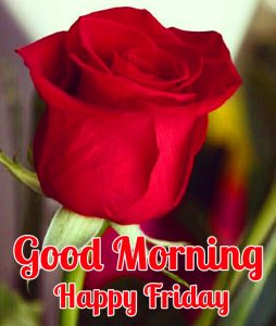 Red Rose Good Morning Happy Friday Image HD