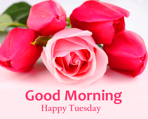 Rose and Tulips Good Morning Happy Tuesday Image