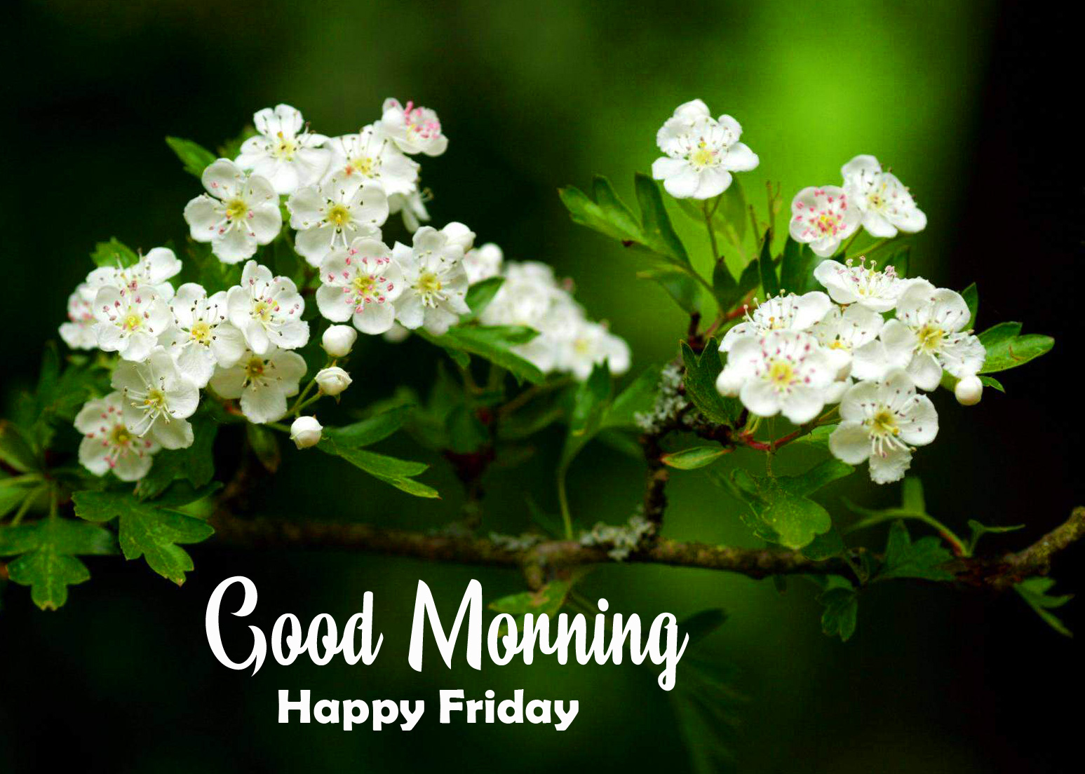White Cute Flowers Good Morning Happy Friday Image