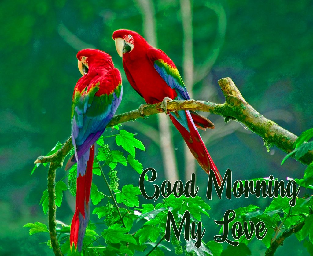 48+ Good Morning Images Love