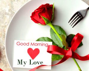 Good Morning My Love Red Rose Photo