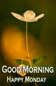 Sweet Flower Good Morning Happy Monday Image