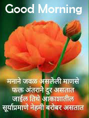 Flowers with Marathi Quote and Good Morning Wish