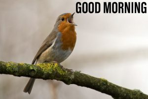 Birds makes a voice with good morning image