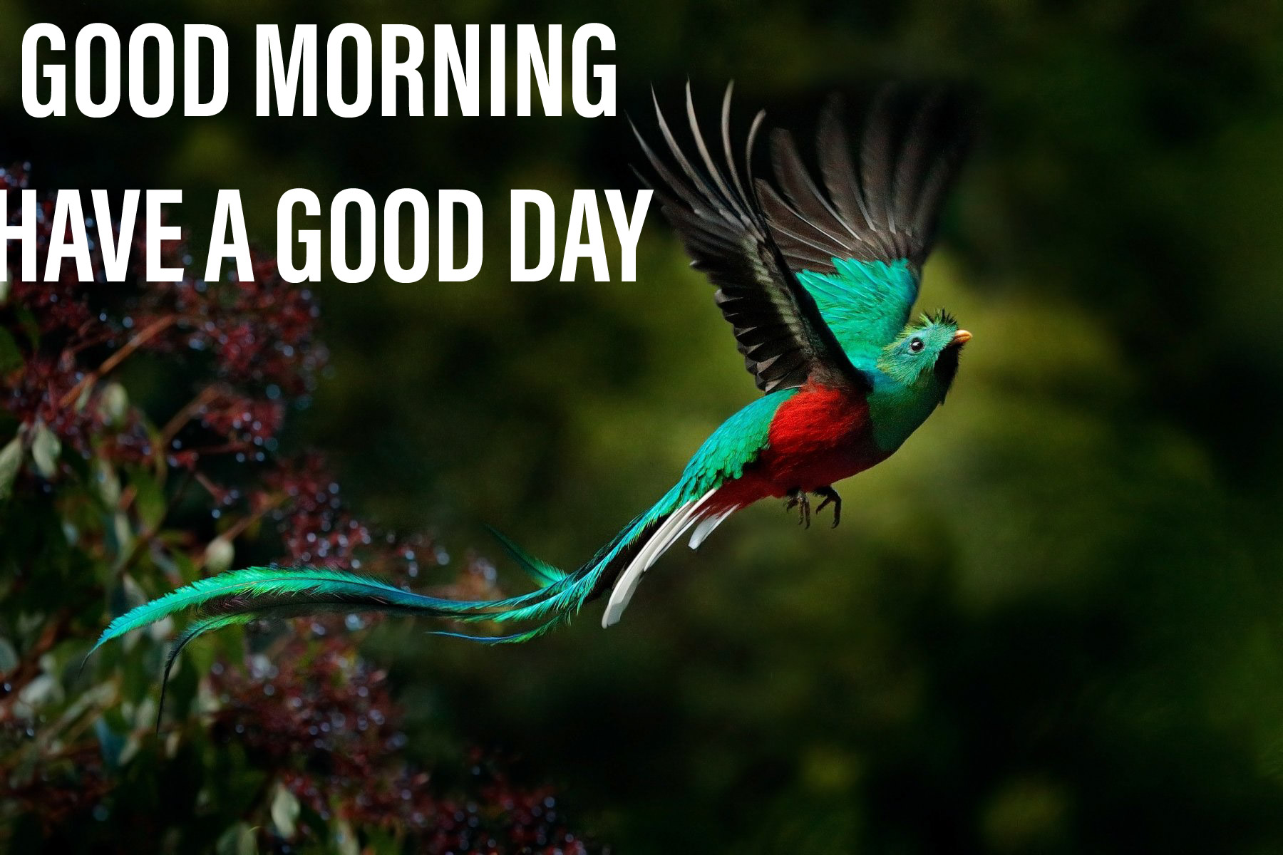 Colourfull image with bird good morning