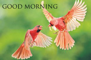 Good morning image with a birds flying