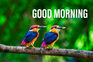 Good morning image with a colourfull image