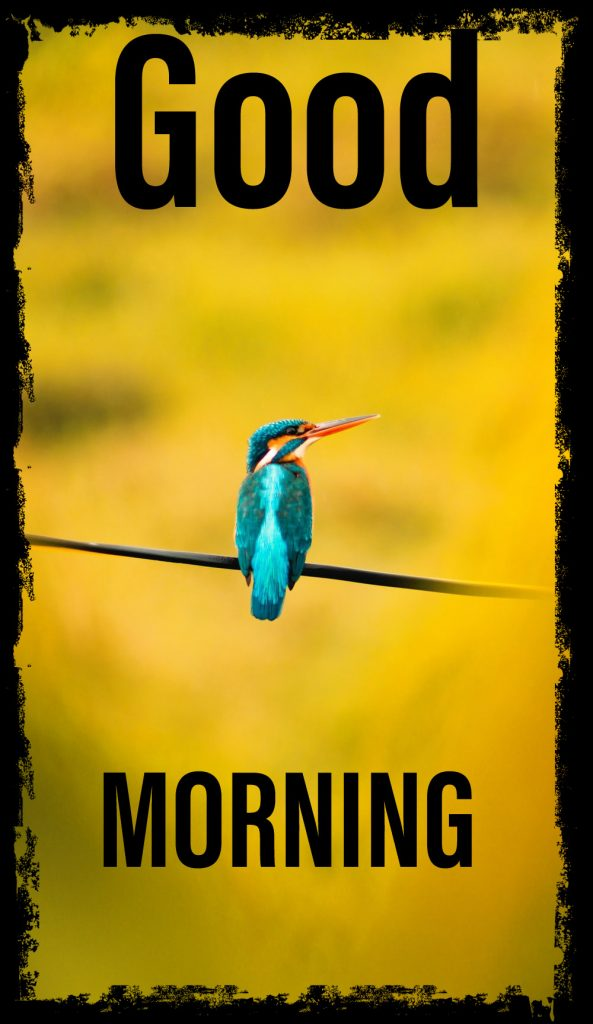 37+ Good Morning Birds Images