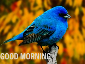 Good morning image with a blue bird