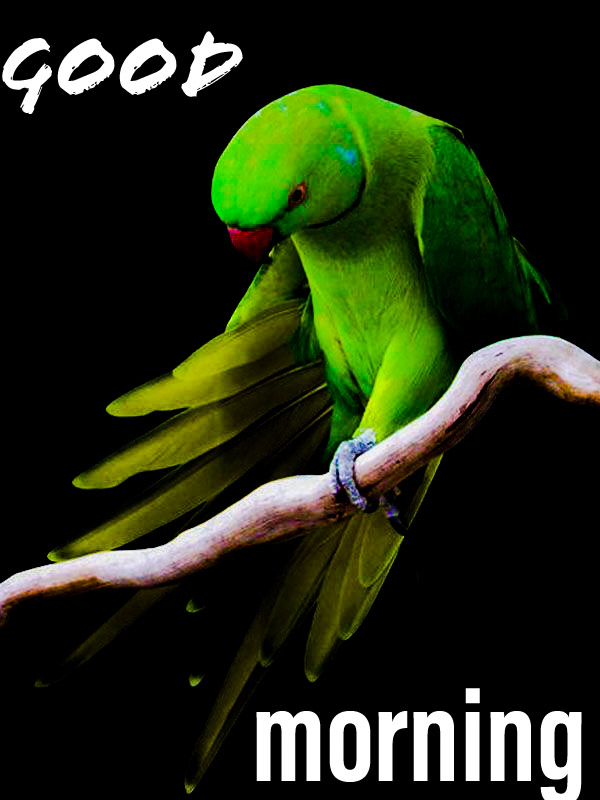 Good morning image with a green parrot